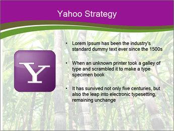 Sugarcane plants PowerPoint Template - Slide 11
