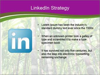 Sugarcane plants PowerPoint Template - Slide 12