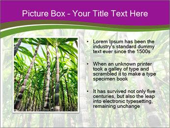 Sugarcane plants PowerPoint Template - Slide 13