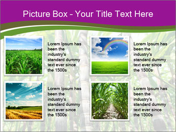 Sugarcane plants PowerPoint Templates - Slide 14