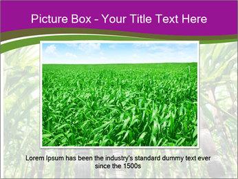 Sugarcane plants PowerPoint Template - Slide 15