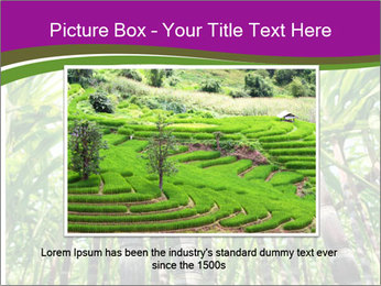 Sugarcane plants PowerPoint Template - Slide 16