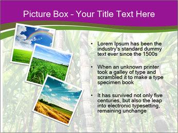 Sugarcane plants PowerPoint Template - Slide 17