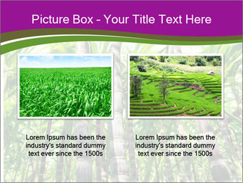 Sugarcane plants PowerPoint Template - Slide 18