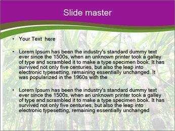 Sugarcane plants PowerPoint Template - Slide 2
