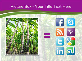 Sugarcane plants PowerPoint Template - Slide 21