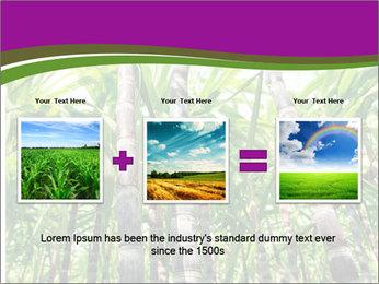 Sugarcane plants PowerPoint Template - Slide 22