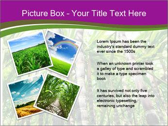 Sugarcane plants PowerPoint Template - Slide 23