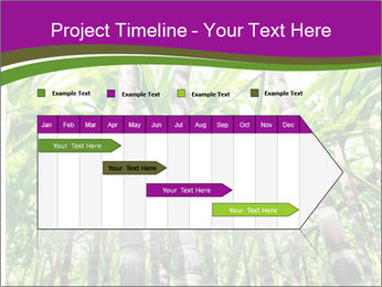 Sugarcane plants PowerPoint Template - Slide 25