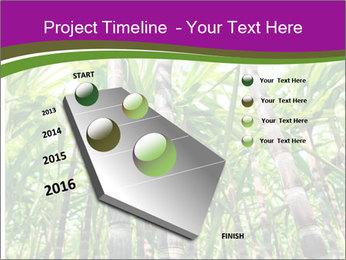 Sugarcane plants PowerPoint Template - Slide 26