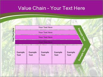 Sugarcane plants PowerPoint Template - Slide 27