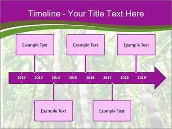 Sugarcane plants PowerPoint Template - Slide 28