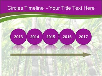 Sugarcane plants PowerPoint Template - Slide 29
