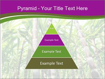 Sugarcane plants PowerPoint Template - Slide 30