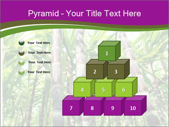 Sugarcane plants PowerPoint Template - Slide 31