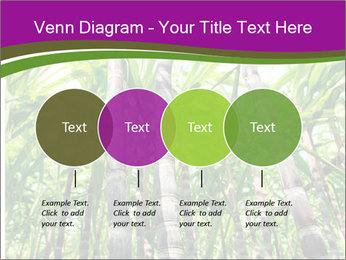 Sugarcane plants PowerPoint Template - Slide 32