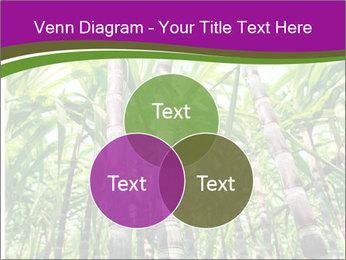 Sugarcane plants PowerPoint Template - Slide 33