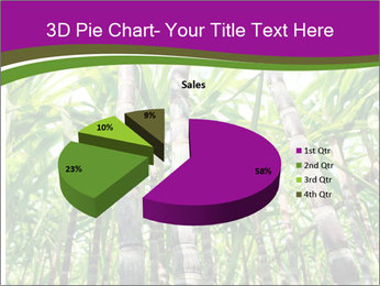 Sugarcane plants PowerPoint Template - Slide 35