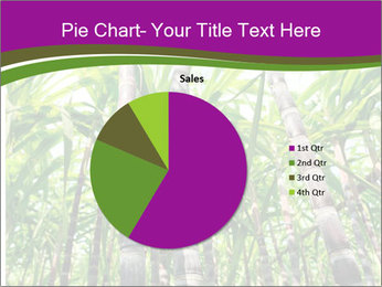 Sugarcane plants PowerPoint Templates - Slide 36