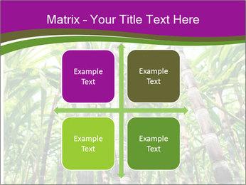 Sugarcane plants PowerPoint Template - Slide 37