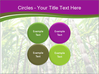 Sugarcane plants PowerPoint Template - Slide 38