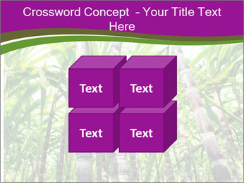 Sugarcane plants PowerPoint Template - Slide 39