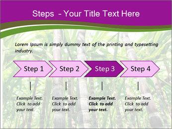 Sugarcane plants PowerPoint Template - Slide 4