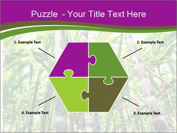 Sugarcane plants PowerPoint Template - Slide 40