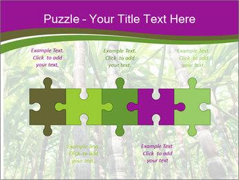 Sugarcane plants PowerPoint Template - Slide 41