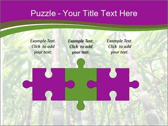 Sugarcane plants PowerPoint Templates - Slide 42