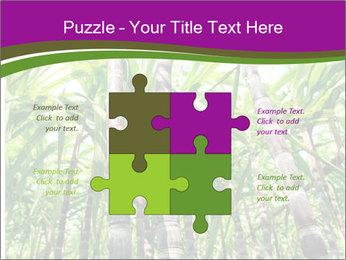 Sugarcane plants PowerPoint Template - Slide 43