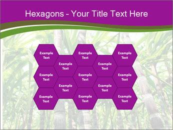 Sugarcane plants PowerPoint Templates - Slide 44