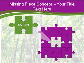 Sugarcane plants PowerPoint Templates - Slide 45