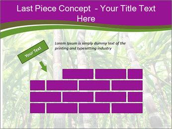 Sugarcane plants PowerPoint Templates - Slide 46