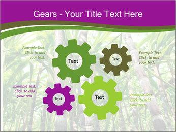 Sugarcane plants PowerPoint Templates - Slide 47
