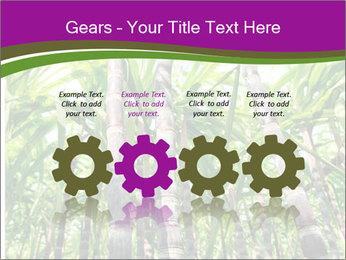 Sugarcane plants PowerPoint Template - Slide 48