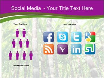 Sugarcane plants PowerPoint Template - Slide 5