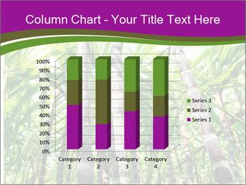 Sugarcane plants PowerPoint Template - Slide 50