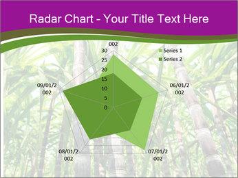 Sugarcane plants PowerPoint Template - Slide 51