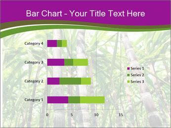 Sugarcane plants PowerPoint Template - Slide 52