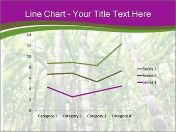 Sugarcane plants PowerPoint Templates - Slide 54