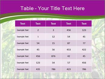 Sugarcane plants PowerPoint Template - Slide 55