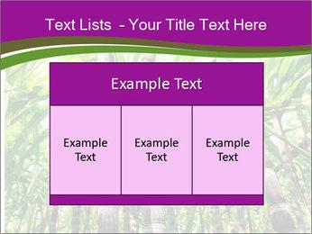 Sugarcane plants PowerPoint Template - Slide 59