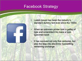 Sugarcane plants PowerPoint Template - Slide 6