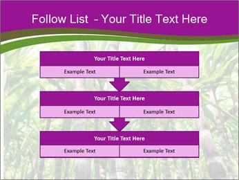 Sugarcane plants PowerPoint Template - Slide 60