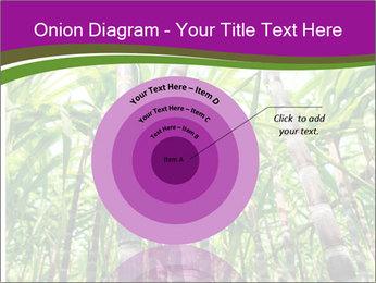 Sugarcane plants PowerPoint Template - Slide 61