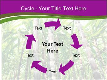 Sugarcane plants PowerPoint Template - Slide 62
