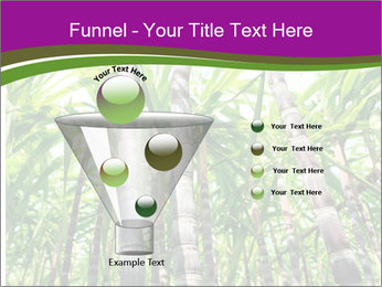 Sugarcane plants PowerPoint Templates - Slide 63