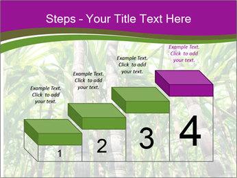Sugarcane plants PowerPoint Template - Slide 64