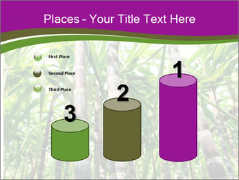 Sugarcane plants PowerPoint Template - Slide 65